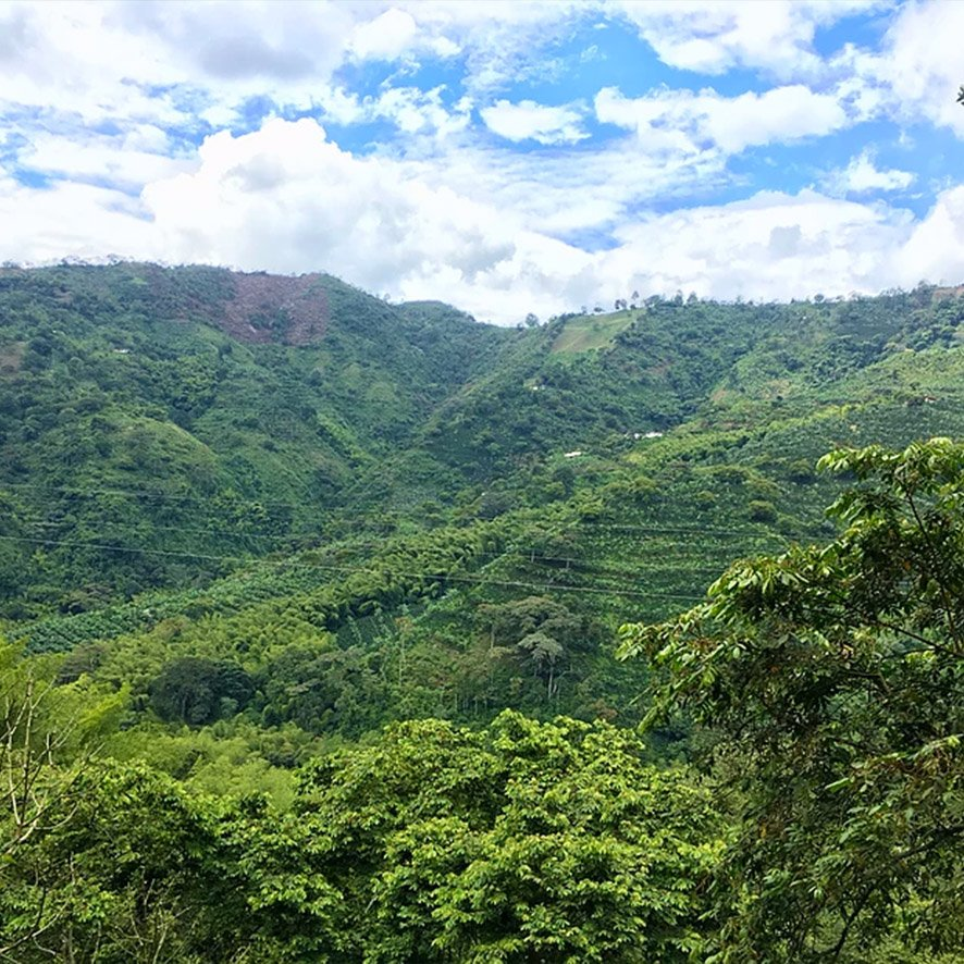 Farm of Colombian Exotic Coffee