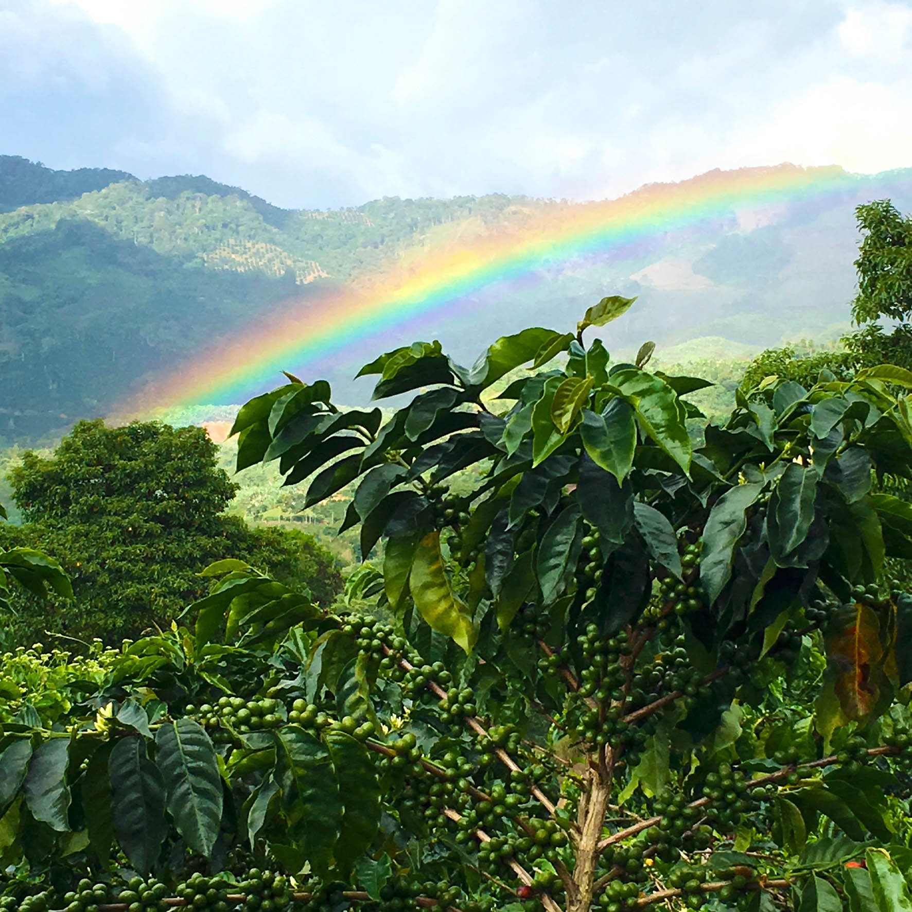 Colombian Exotic Coffee farm_2