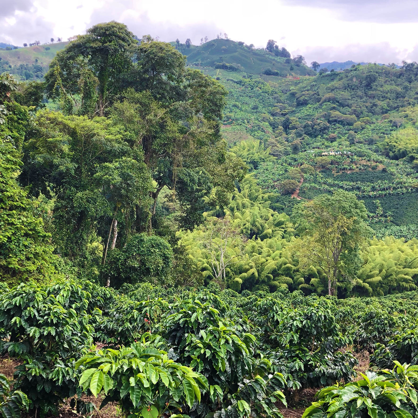 Colombian Exotic Coffee farm_5