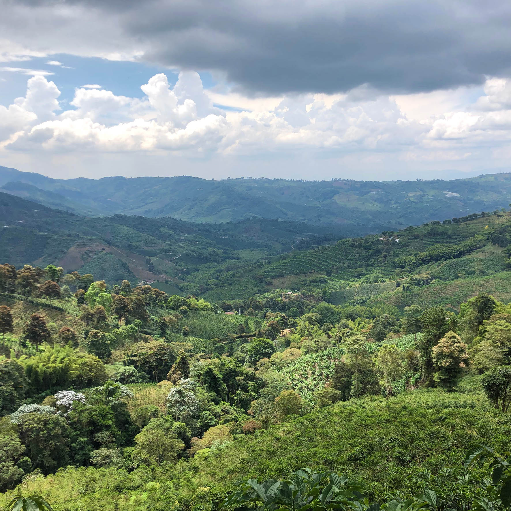 Colombian Exotic Coffee farm_9
