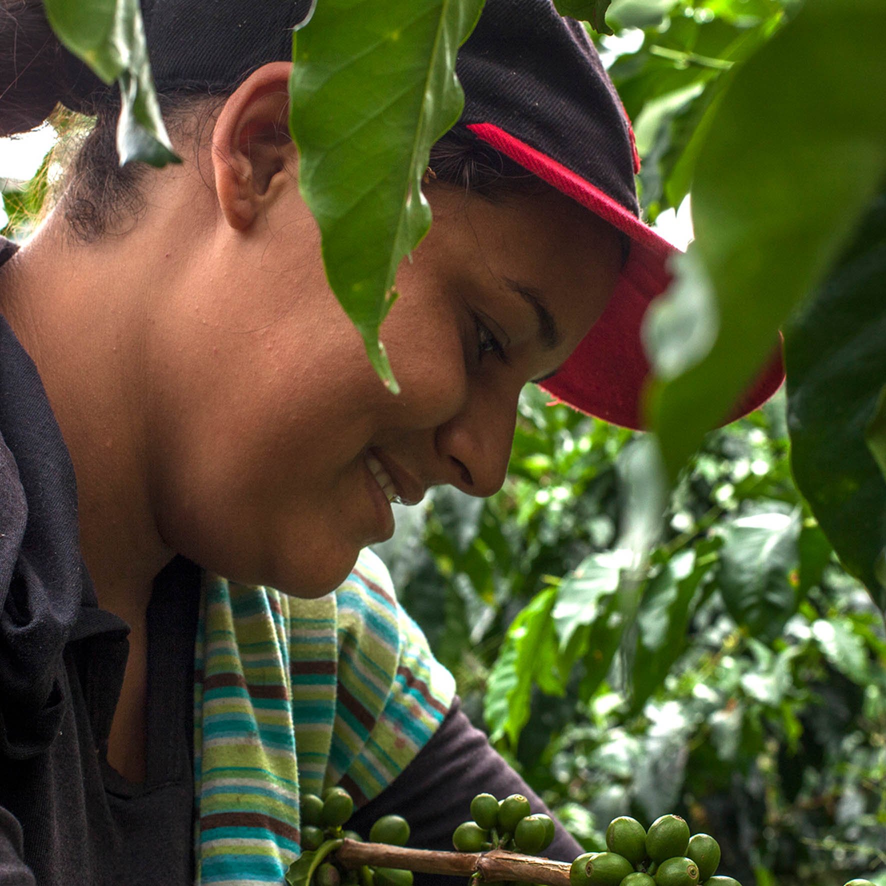 Colombian Exotic Coffee sustainability_1