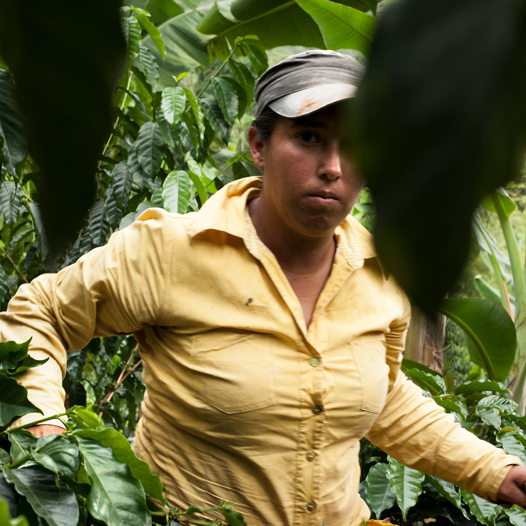 Colombian Exotic Coffee sustainability_3