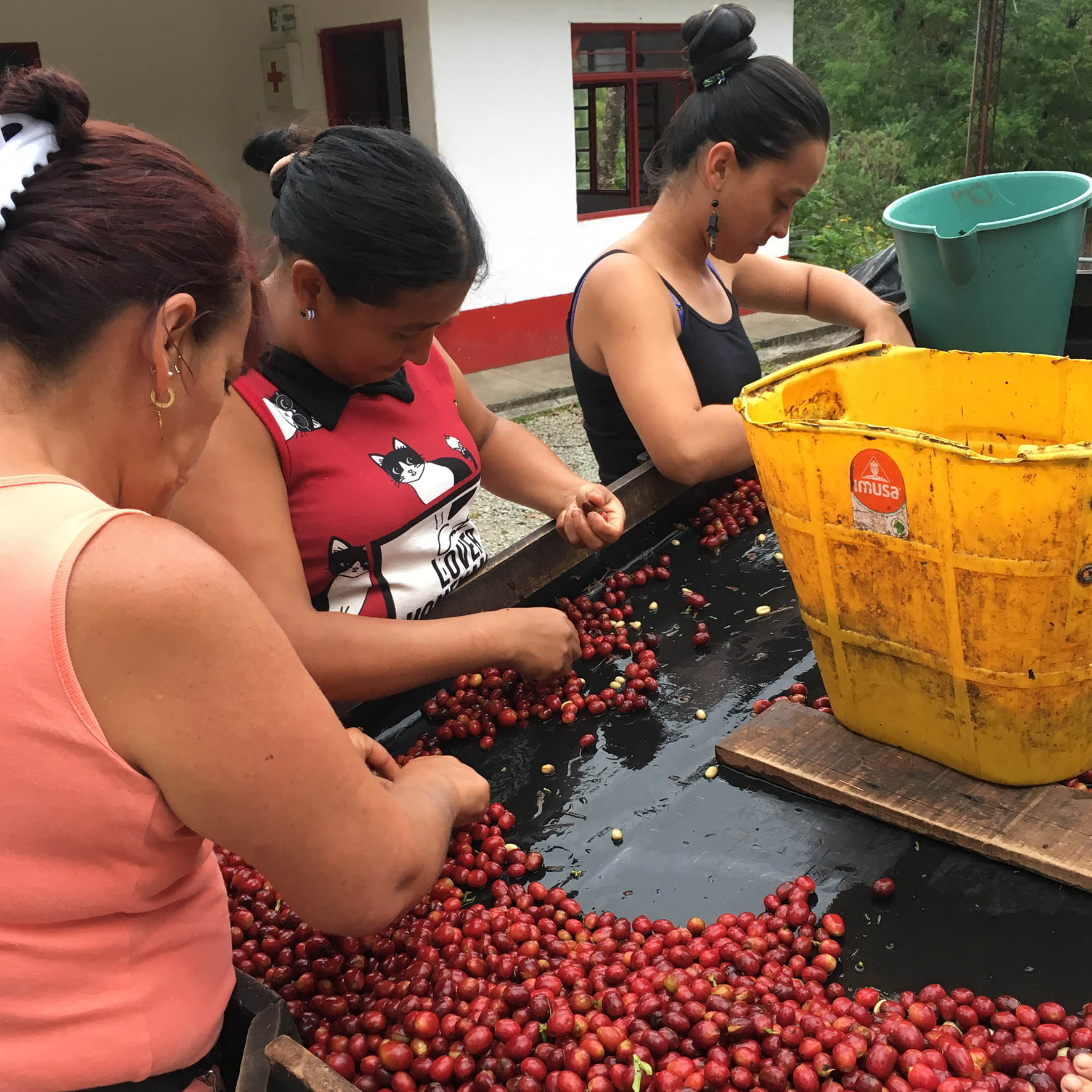 Colombian Exotic Coffee sustainability_4